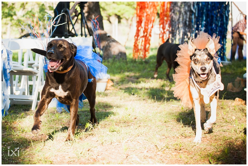 orange-blue-dogs-wedding-heart-of-texas-ranch_0030