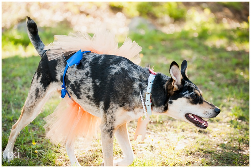 orange-blue-dogs-wedding-heart-of-texas-ranch_0038