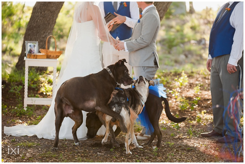 orange-blue-dogs-wedding-heart-of-texas-ranch_0044